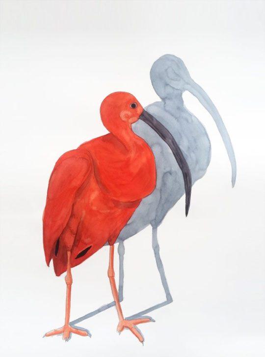 Acuarela Ibis Escarlata 1 50x70cm Serie Animales G de Elena Calonje