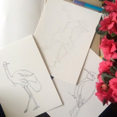 Crowned Cranes drawings by Elena Calonje