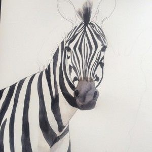 big Watercolor Zebra