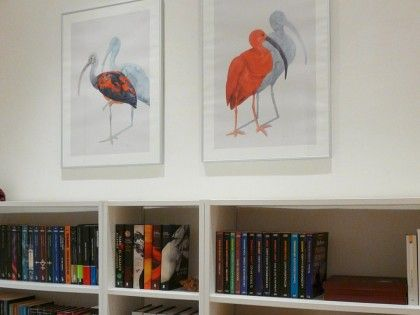 Scarlet Ibis Prints Are Available